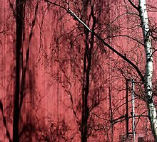 Tree Red Shadow by richman