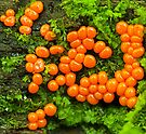 tiny slime mold by Manon Boily