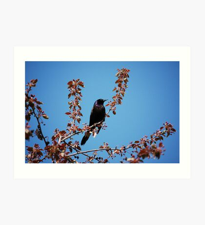 How Now Black Bird ! Art Print