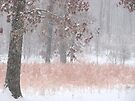 Pastel Colors During The Snow Storm by NatureGreeting Cards ©ccwri