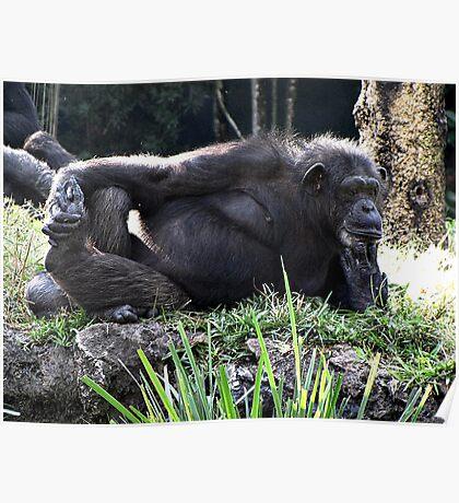 Pensive Chimp Poster