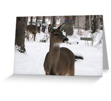 Yesterdays Visitors 1-30-2010 Greeting Card