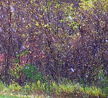 Snow in October- First Flurries by JPDesignWorks