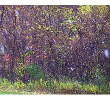 Snow in October- First Flurries Photographic Print