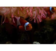 Finding Nemo Photographic Print