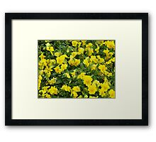 Yellow Pansies Flower Patch Framed Print