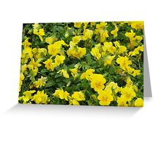 Yellow Pansies Flower Patch Greeting Card