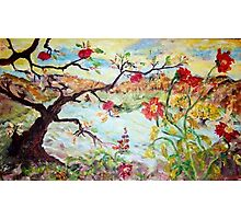 Apple Tree in the Meadow Photographic Print