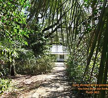 Through the Trees, Jacksonville by Photos4God