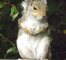 A Cute Squirrel  by Jacqueline Turton