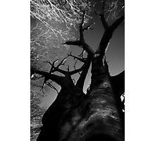 Winter Limbs Photographic Print