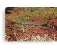 Hiding alligator Canvas Print