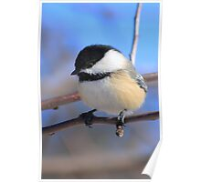 Black-Capped Chickadee Jan 2010 Poster