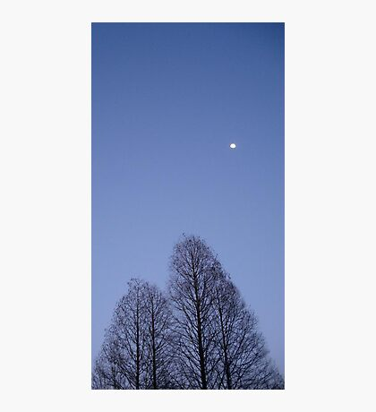 Cypress Trees and the Three Quarter Moon Photographic Print