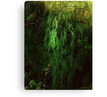 Asparagus Jungle Canvas Print