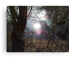 Light peeks through trees and says 'Hello'. Canvas Print