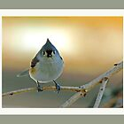 Tessy, the Tufted Titmouse by Brenda Dow
