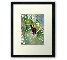Web Spinner Framed Print