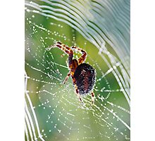 Web Spinner Photographic Print