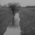 Damp tree BW by Ecohippy
