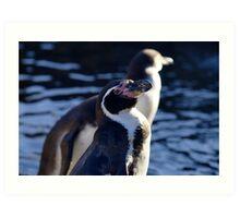 Humboldt Penguin Art Print