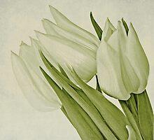 White by Priska Wettstein