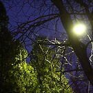 Purple Night Sky by Casey Voss