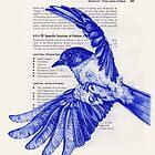 Bird in Flight by paulapaints