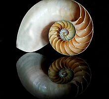 Shell Symmetry by Nancy Bray