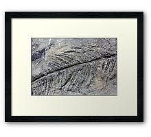 Fossil Plant Framed Print