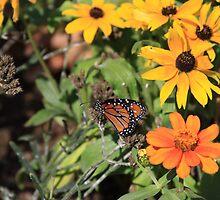 The Monarchs Throne by Jessica Berardi
