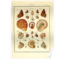 Neues systematisches Conchylien-Cabinet - 386 Poster