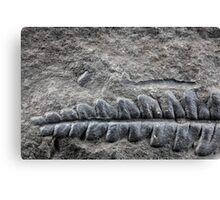 Fossil Plant Canvas Print