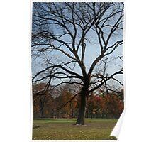Leafless - Central Park - New York Poster