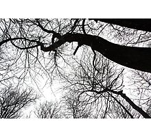 Things are looking up Photographic Print