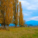 Kiewa Valley Landscape by johnrf