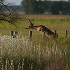 Buck Over Fence by Jerry Segraves