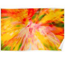 Bromeliad Explosion Poster