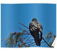 #2 . Series . black cockatoos  Poster