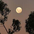Kyneton Moon by Meg Hart