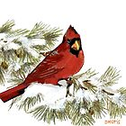 Art Print Red Cardinal in Snow by dorcas13