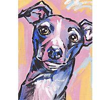 Italian Greyhound Dog Bright colorful pop dog art Photographic Print