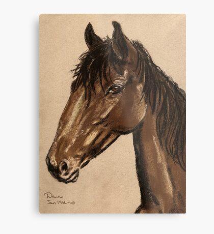 Equine Stud Metal Print