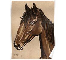 Equine Stud Poster