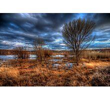 3 Trees Photographic Print
