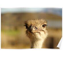 Oudtshoorn Animal 2 Poster