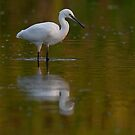 Little Egret  by BogdanBoev