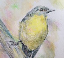 Eastern Yellow Robin by dido92