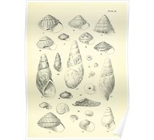 Manual of the New Zealand Mollusca by Henry Sutter 1915 0129 Laodia Poster