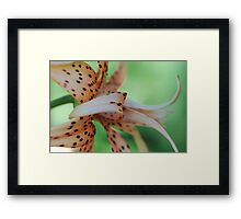 Beauty Behind The Spots Framed Print